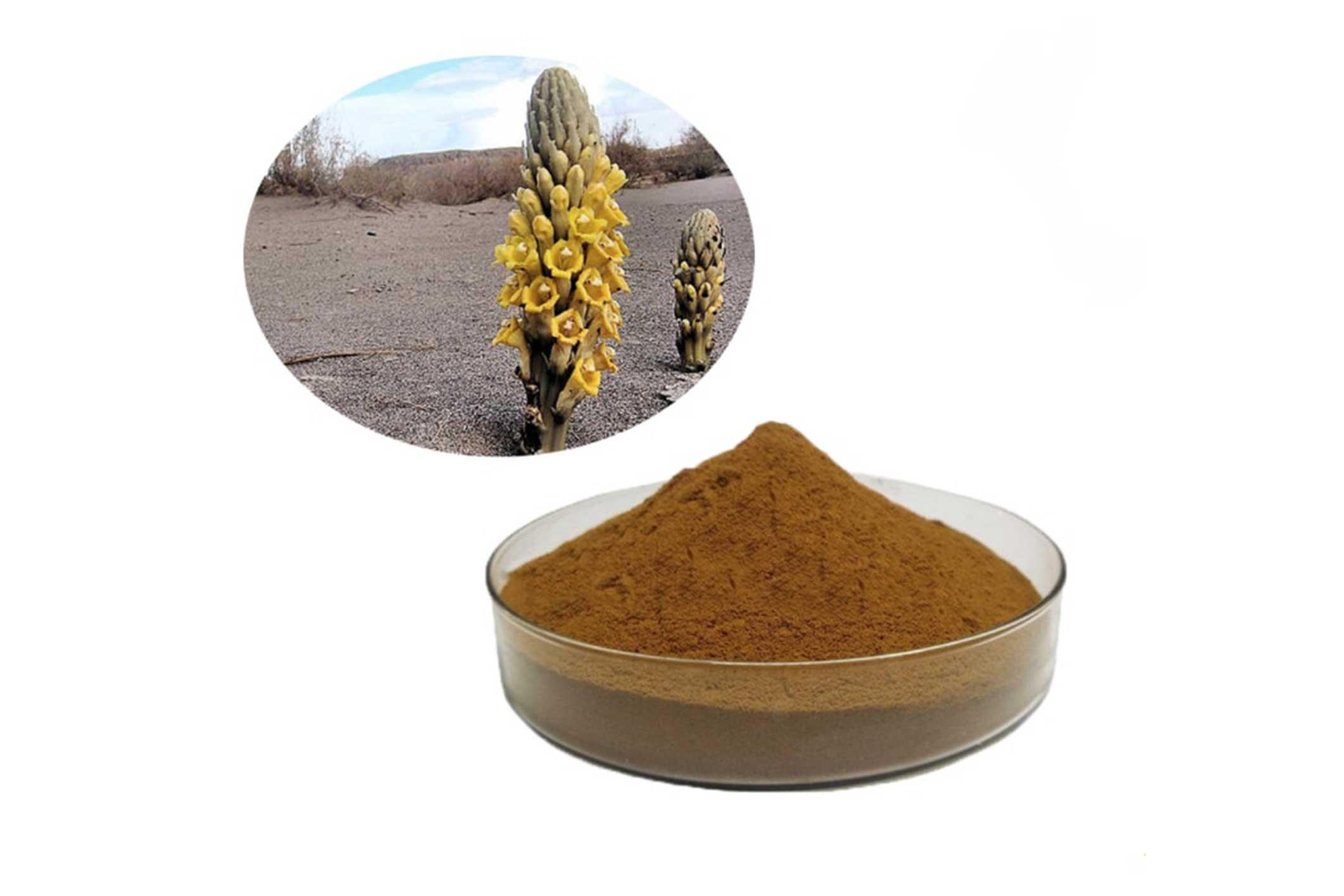 جنسنج-الصحراء